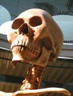 crânio-de-gigante-7m