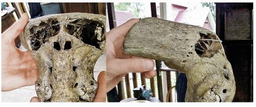 Un maletín del tercer reich y dos cráneos alienígenas encontrados en las montañas de rusia C2108-malet25c325adn2bdel2btercer2breich2by2bdos2bcr25c325a1neos2balien25c325adgenas2bencontrados2ben2blas2bmonta25c325b1as2ben2brusia2b252882529
