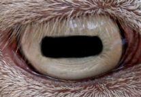 Ojo de Cabra.jpg